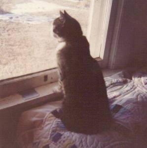 Gail's sister, CJ Garriott, took this photo of Lil Cat.