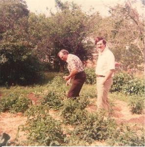 Clyde Martin picking tomatoes with a visitor.