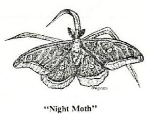 Shannon Martin's drawing of a moth for her entomology project.