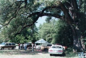 Farmers Market Cottonwood Tree_1999