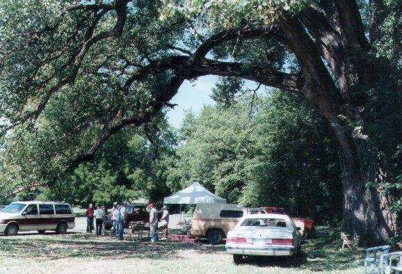 Farmers Market Cottonwood Tree_1999
