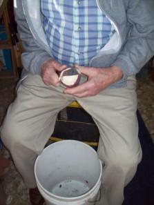 CO peeling turnip #2