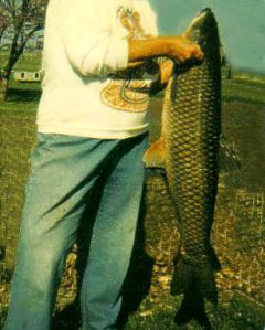 Clyde was so excited about the 30 pound grass carp that he cut off Gail's head in this photo. (photo by Clyde Martin)