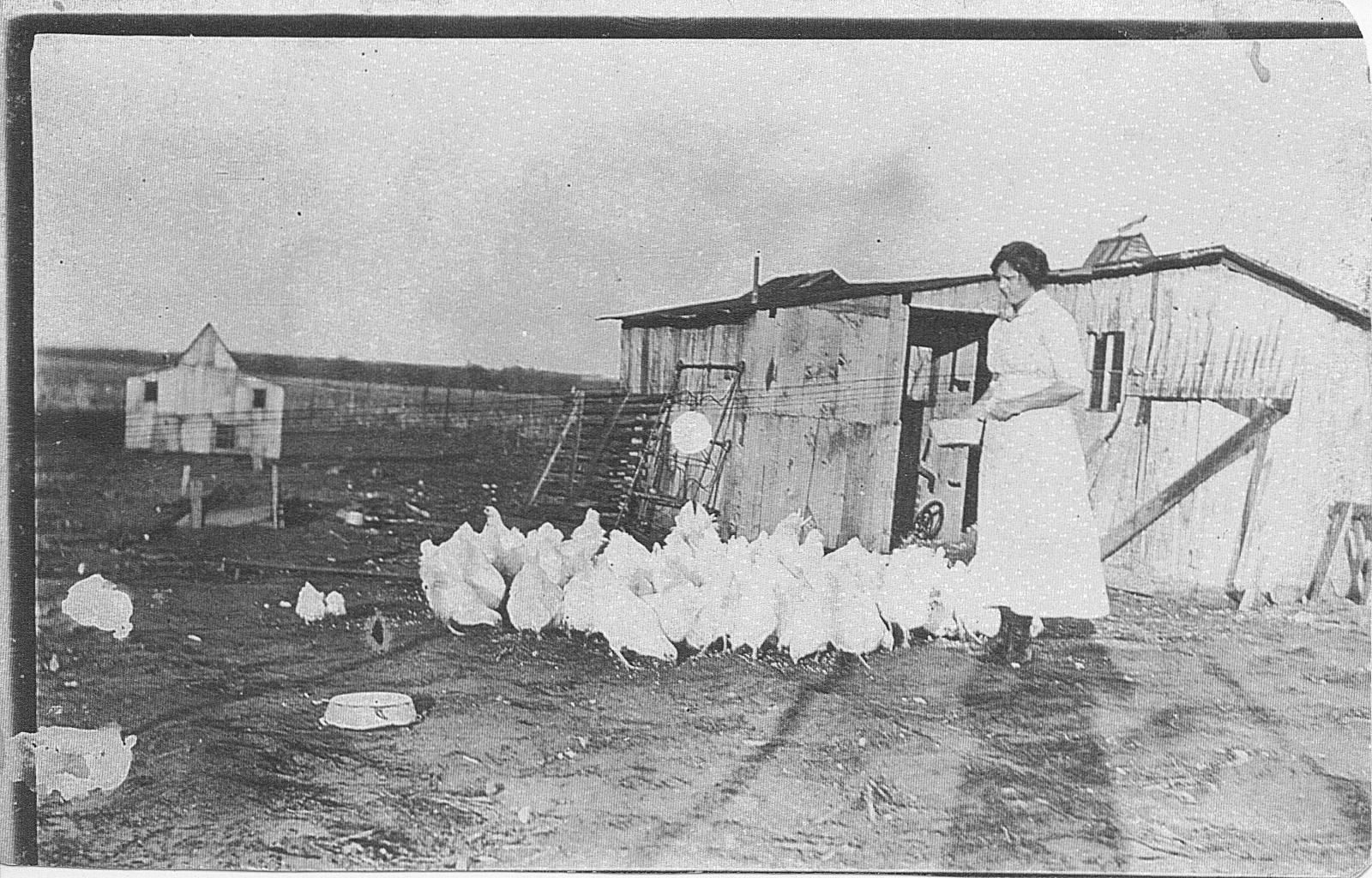 Ruth feeding chickens
