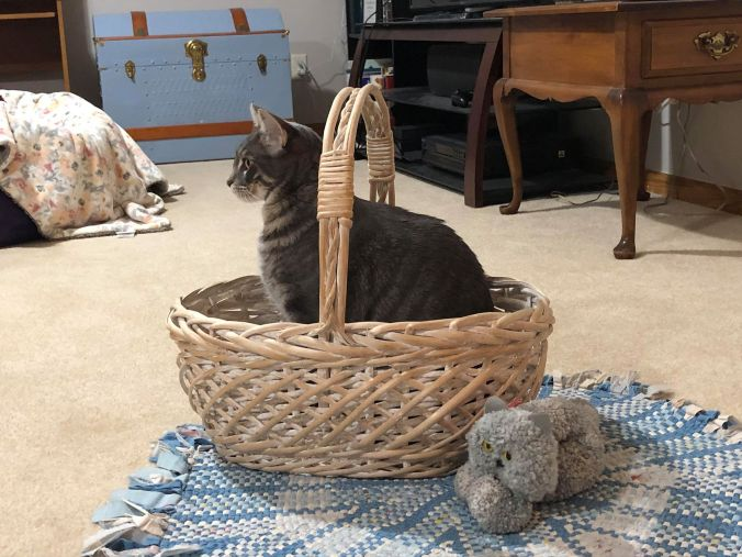yarn cat and real cat