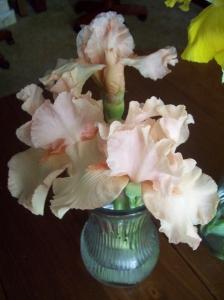 karen's iris