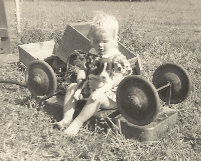 Memories of a 1950s childhood - Ginger Martin