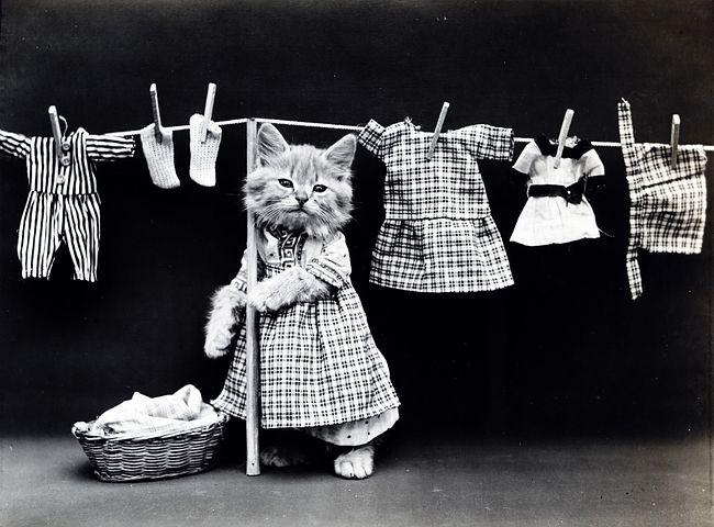 cat-washday pixabay