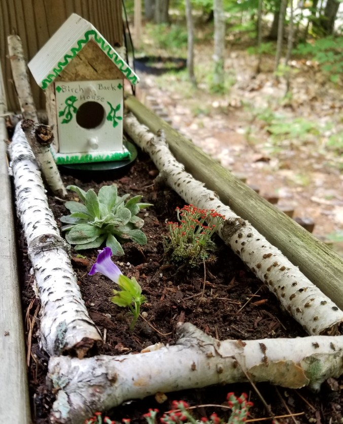 Fairy Garden with plants and little house