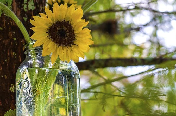 sunflower-jar pixabay