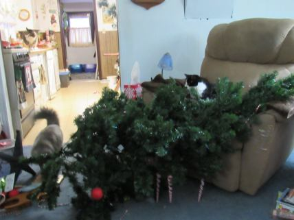 2016, tree down! Graycie managed to bring it down, on top of Fraidy in the recliner. The heavy part missed him, just lots of branches, so he was only startled.