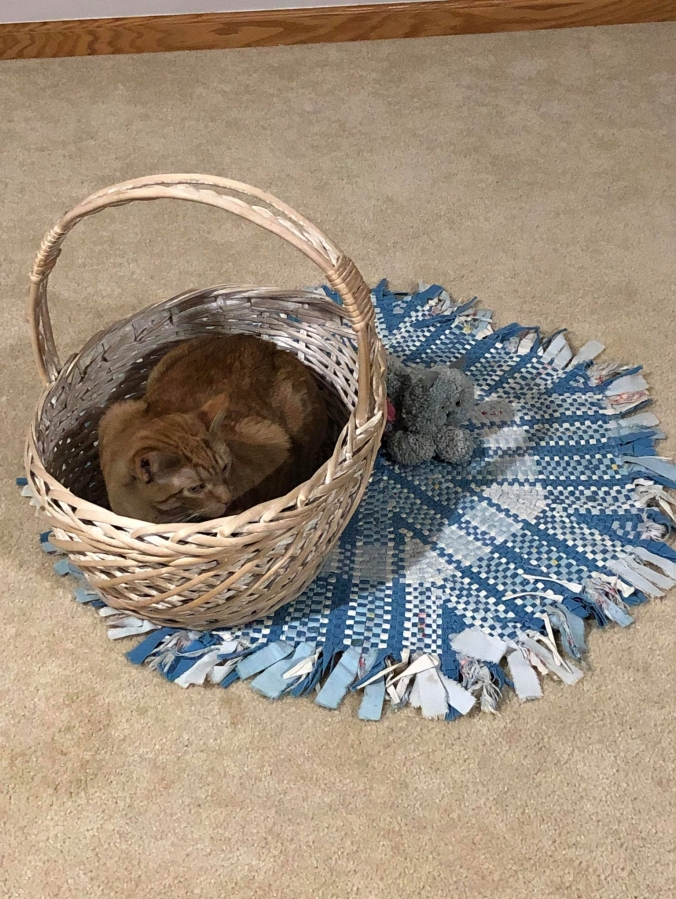 blue-rug-and-gray-yarn-cat-and-basket-nikki.jpg