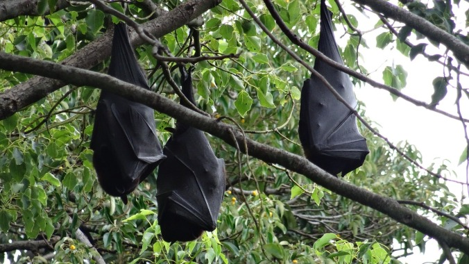 bats in tree pixabay