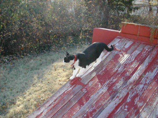 Nellie - Karen's Cat