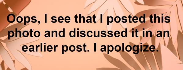 oops duplicate post