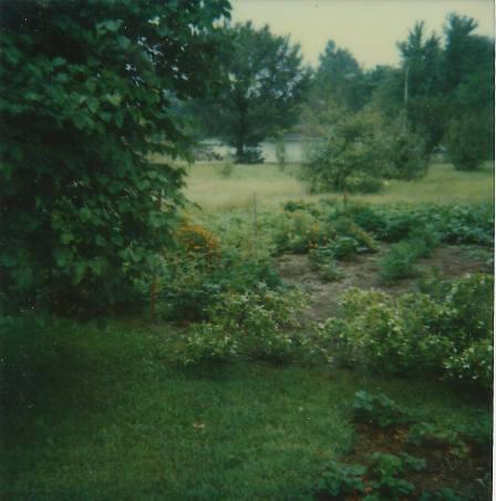 Prescott garden