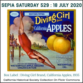 sepia saturday july 18 fruit label